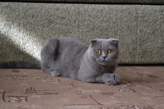 Кошка Уша.