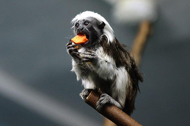 обезьяна ест