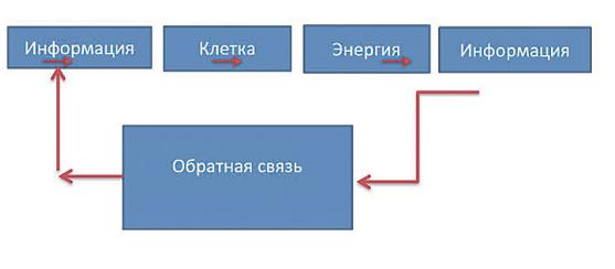 Принципиальная схема энергоинформационной профилактики с использованием обратной связи.