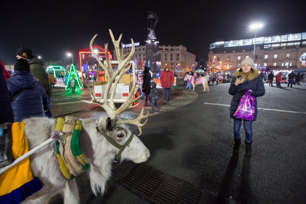 Даже северный олень примчался на площадь Владивостока.