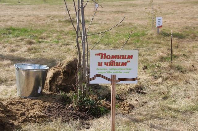 Это мероприятие проводится уже четвертый год. За это время в парке Победы высадили около 500 деревьев.