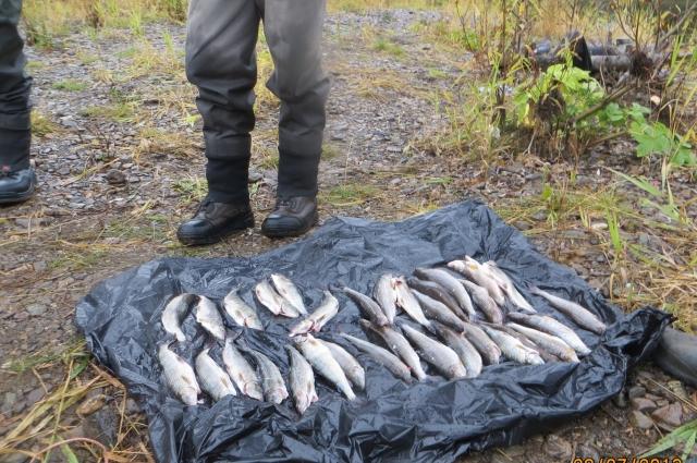 Ущерб водным биоресурсам составил 49 550 рублей.