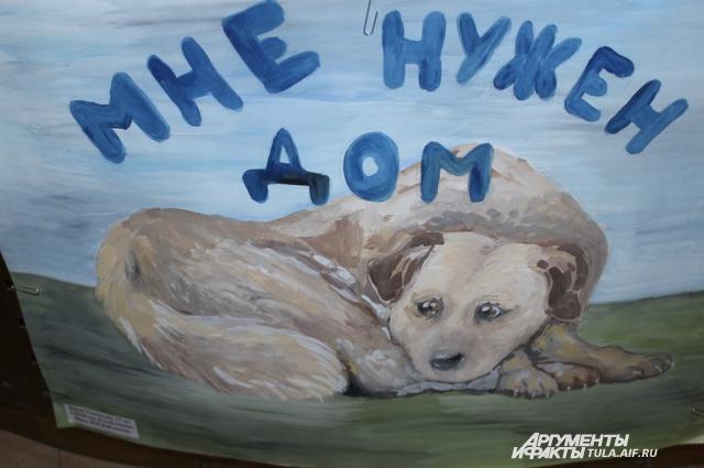 Десятки бездомных животных ищут дом