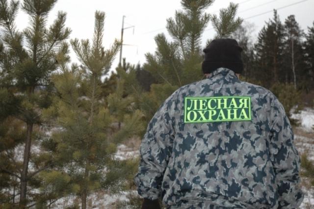 Лесная охрана инспектирует лес Омской области.