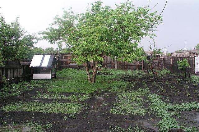 Летом в саду и в огороде много забот.