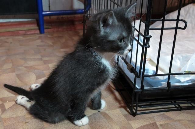 У котенка перебиты задние лапки.