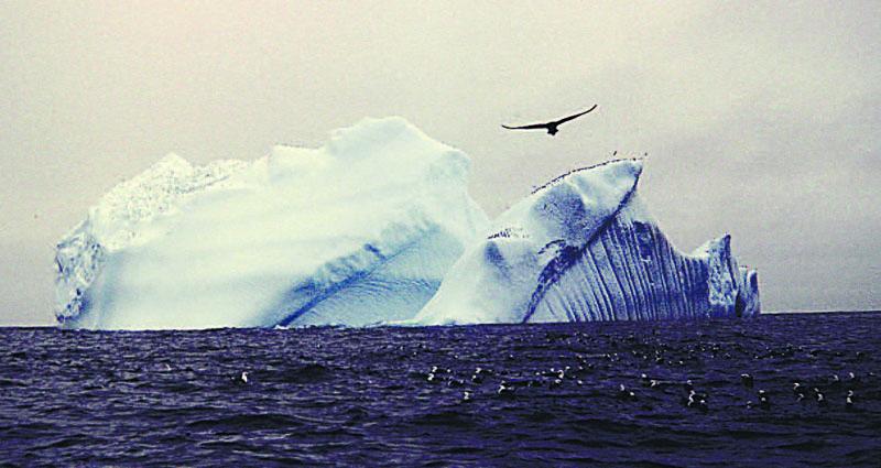 «Птица и айсберг» – снимок сделан в тех местах, где погиб «Титаник».