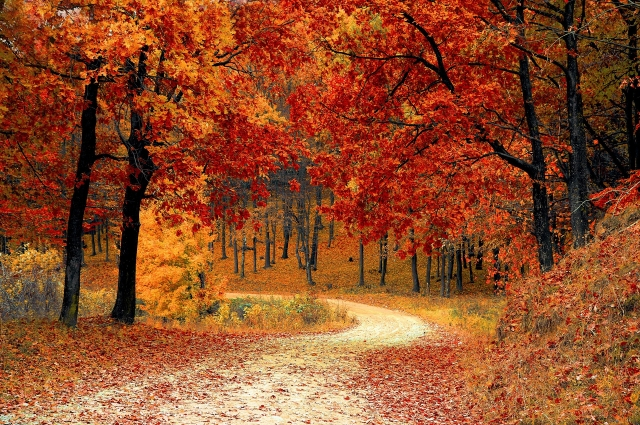 Осенний лес производит неизгладимое впечатление.