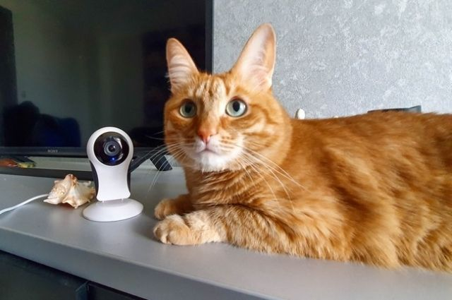 Кто присмотрит за котом?