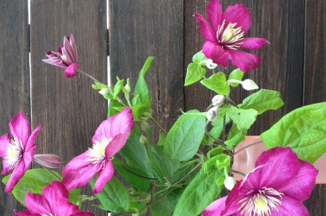 Выращивайте прекрасные растения у себя на участке!