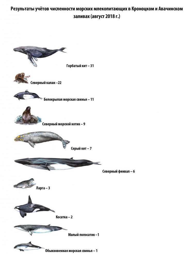 Учёты морских млекопитающих в Кроноцком заповеднике.