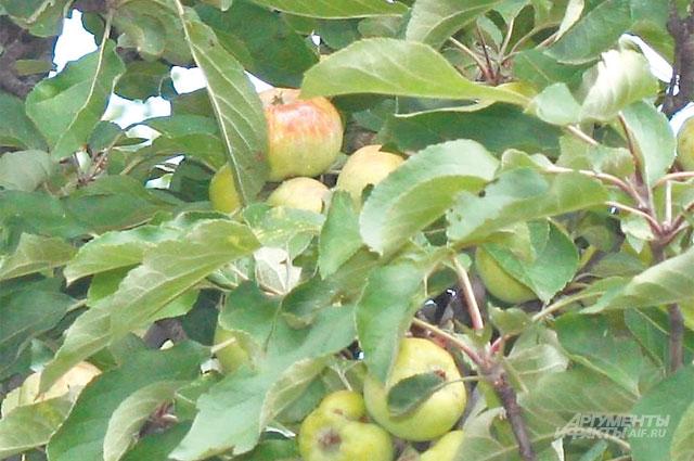 Яблоки помогут продлить свежесть выпечки.