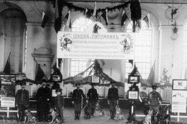 , к началу Первой мировой войны работало уже более 100 питомников служебных собак.