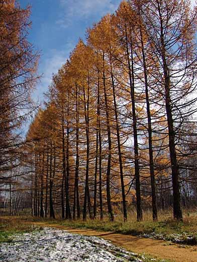 На фото: парк имени Алексея Леонова. Фото пресс-службы департамента лесного комплекса.