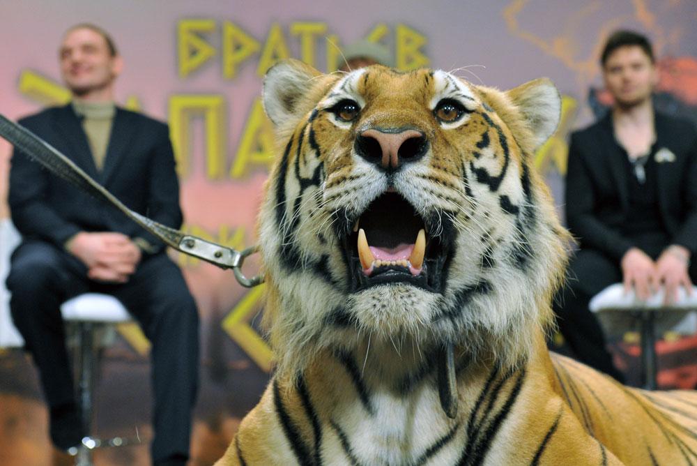 Дрессированный тигр по кличке Мартин