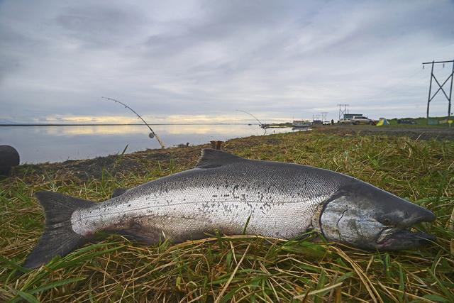 Некоторым рыбакам везёт.