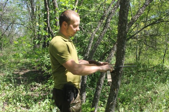 Лесопатологическое исследование займет около месяца.