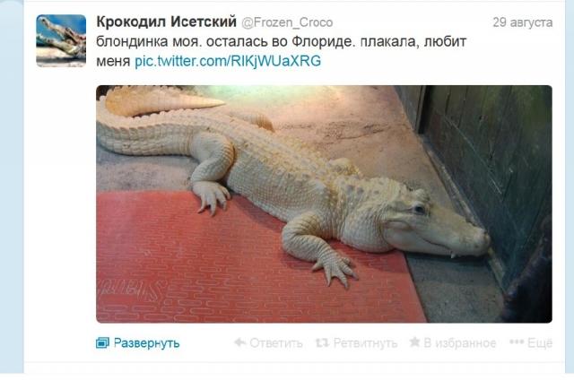 Крокодил Исетский