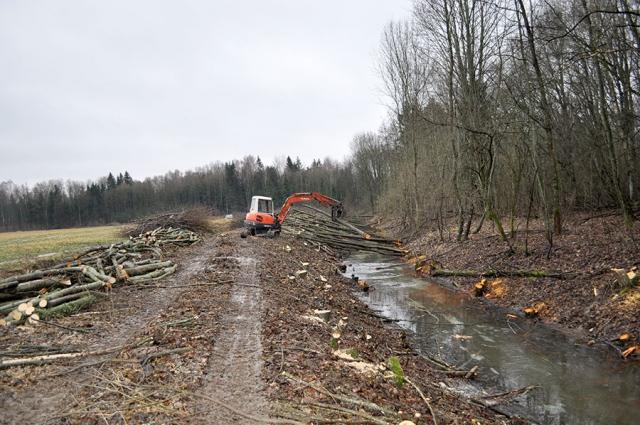 Впервые за 15 лет в Калининградской области проводят мелиорацию лесов.
