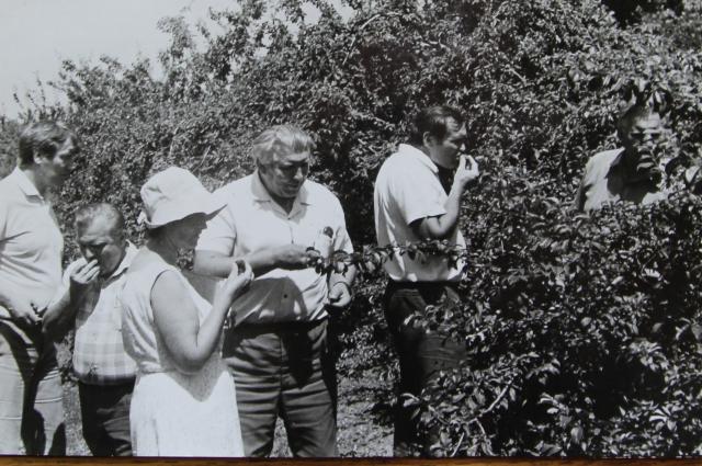 Японцы едят черешню, предварительно они ее проверили дозиметром на радиацию.