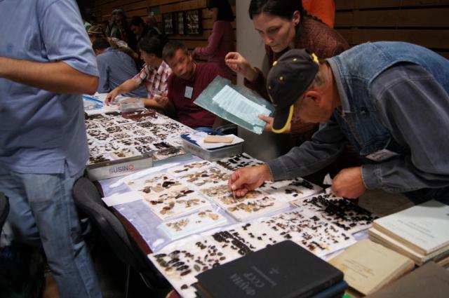 В коллекции новомосковского энтомолога порядка 270 тысяч видов насекомых.