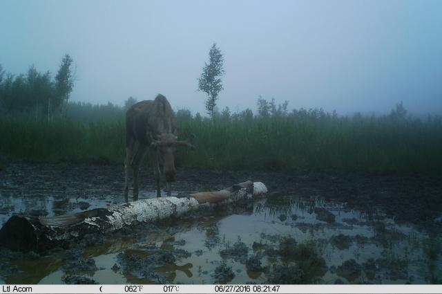 Животные были сфотографированы в естественной среде.