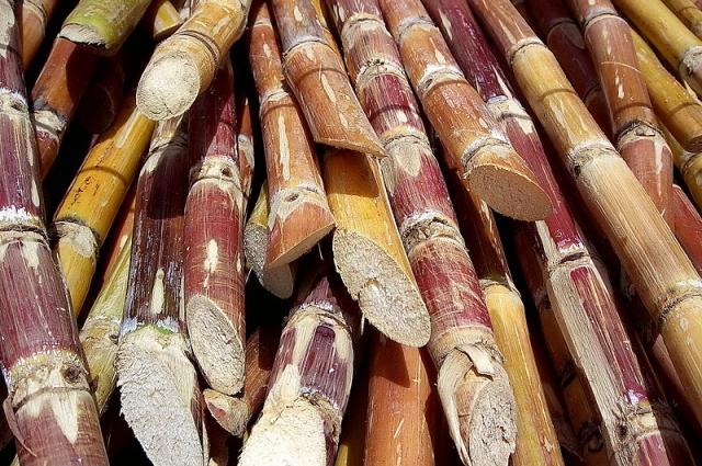 Изначально в России ели сахар, изготовленный из сахарного тростника.
