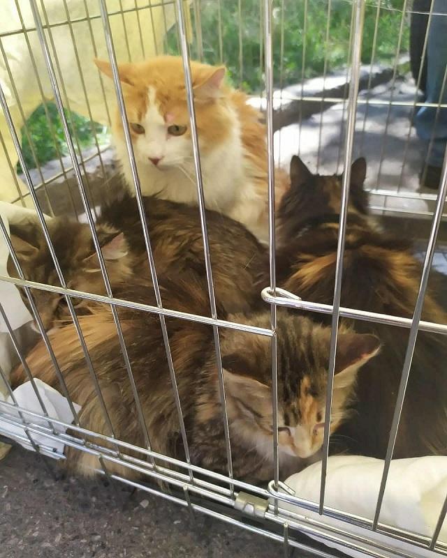 Четверым кошкам удалось выжить благодаря доброй женщине, которая их подкармливала, просовывая в дверную щель тоненькие ломтики колбасы.