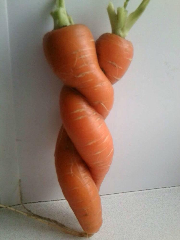 Ольга Золотарёва: «Такая вот «любовь-морковь».