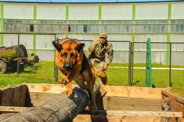 Собака - верный компаньон бойца.