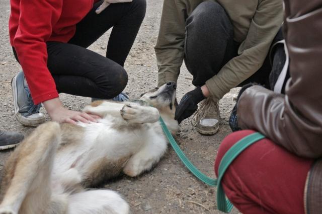 Несмотря на свою травму, Байкал – очень активный и жизнерадостный пёс.
