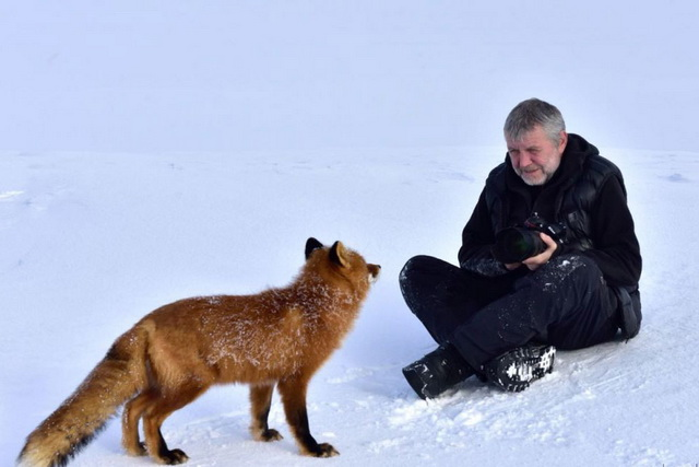 Инспектор Кроноцкого заповедника фотографирует лиса.