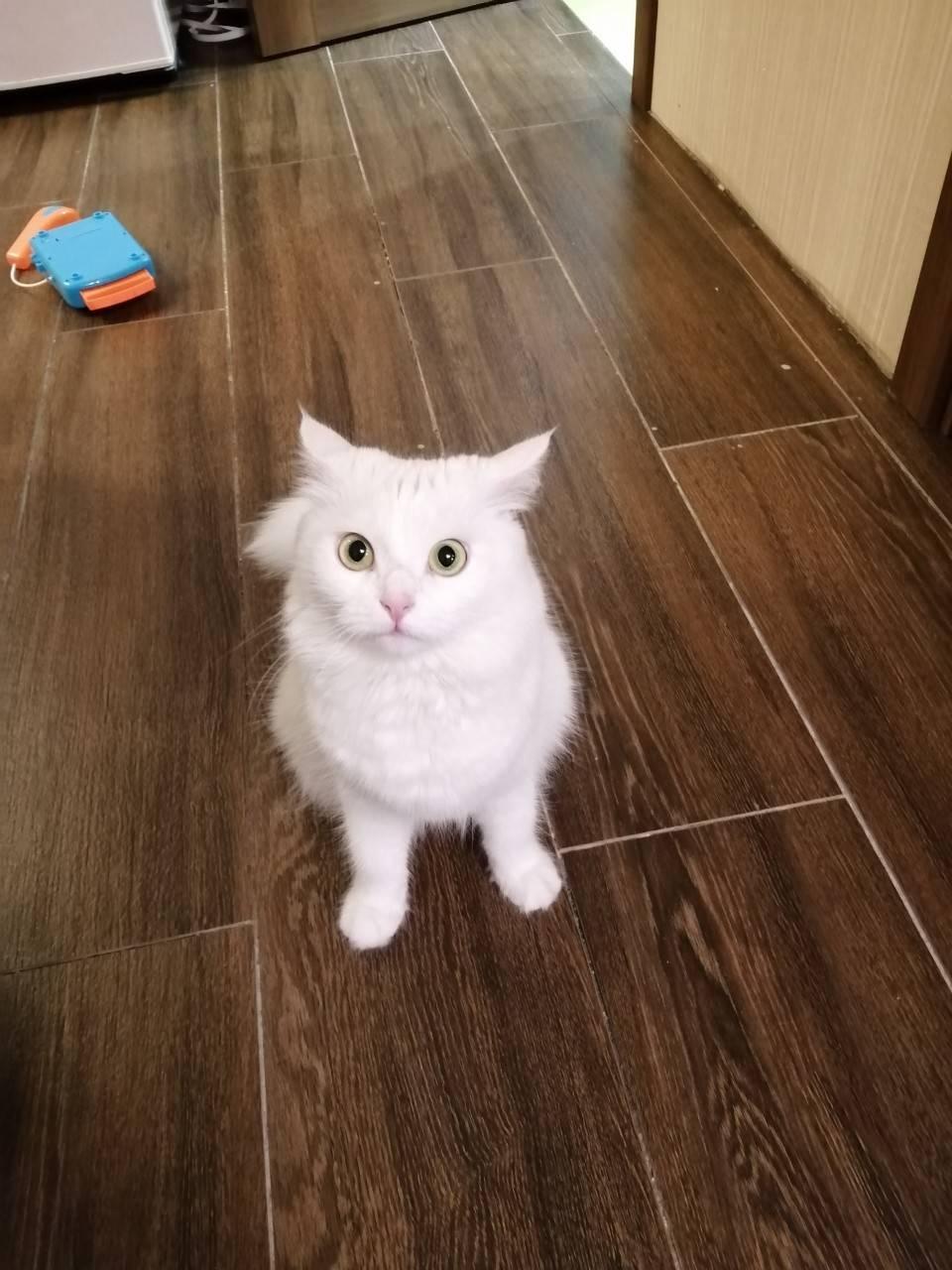 Кошка Снежана.