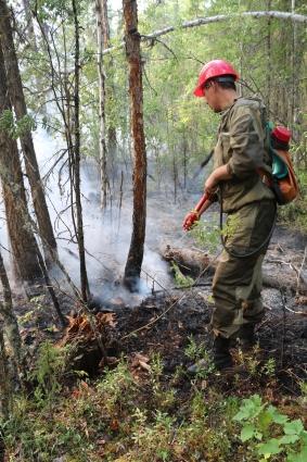 Вне зоны влияния человека около 80% пожаров - низовые.