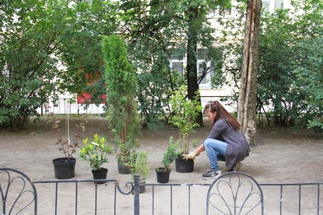 Для озеленения были закуплены саженцы различных растений.