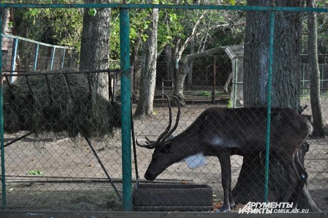 Хвоя пригодится и в зоопарке.