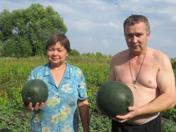 Супруги Медведевы: «Вкуснейшие арбузы каждый год у нас на столе».