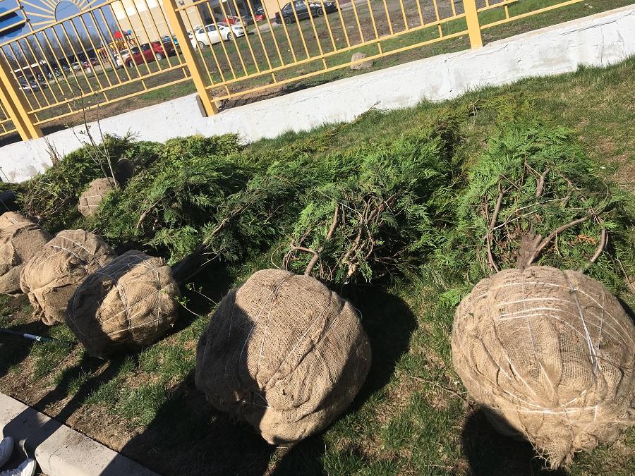 Посадка деревьев шла во всех районах Ростова