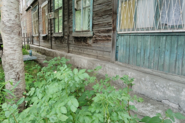 под окнами многоквартирного дома в Новосибирске можно встретить огород.