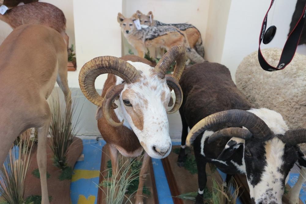 «Зоологический театр» в свердловском Краеведческом музее