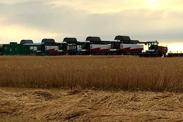 В 2019 году взяли не количеством, а качеством зерна. На полях хозяйства работает отечественная донская техника.