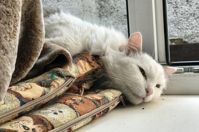 В кафе можно будет играть с кошками, встречаться с друзьями, читать книги.