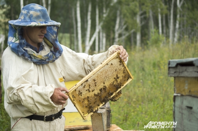 Стоимость мёда обычно в 7 раз выше стоимости сахара.