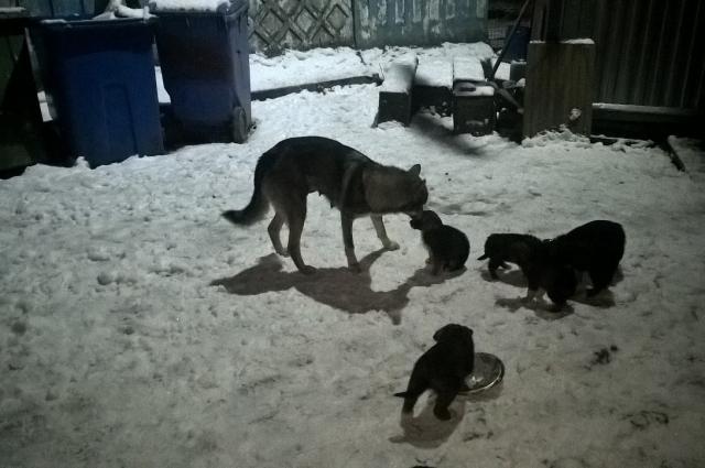 Бездомные щенки со своей мамой жили на свалке.