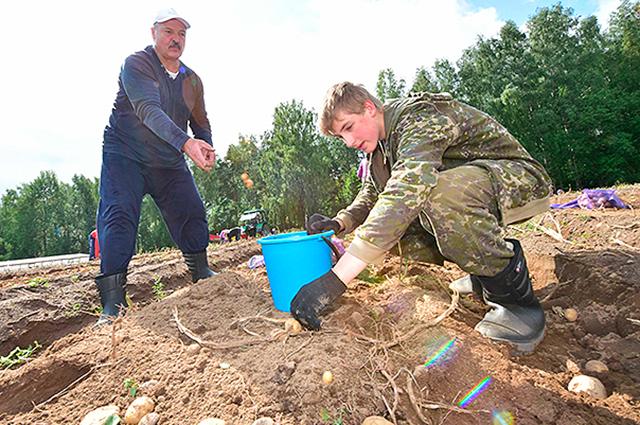 Президент Лукашенко вместе с сыном готов всем показать, как надо работать.