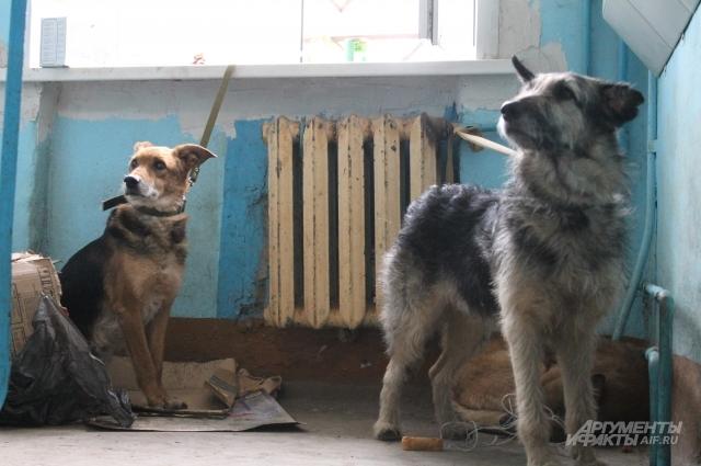 Нескольких собак привязали в подъезде. Их заберут в частный приют