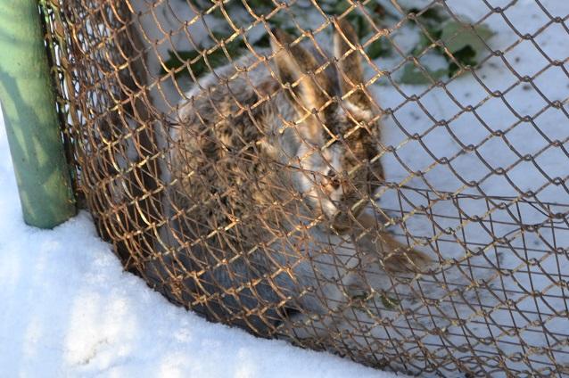Масленицу для самых маленьких в Пензенском зоопарке можно совместить со знакомством с героями русских народных сказок.