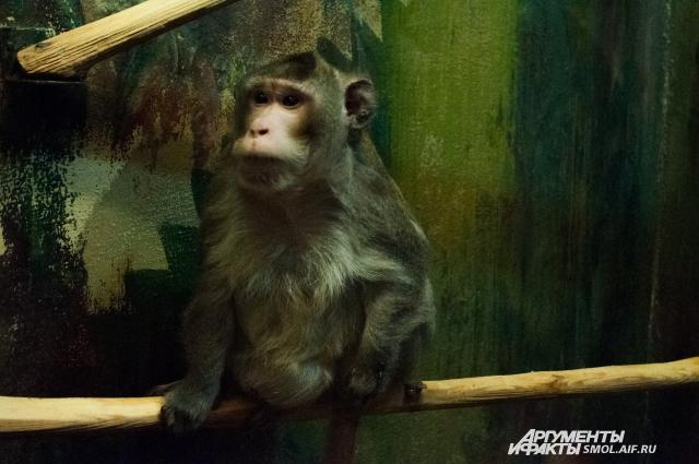 Мудрый и опытный Григорий хоть и давно седой, но интерес к посетительницам тоже проявляет.