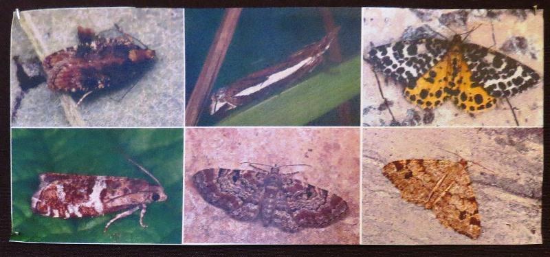 Этих красоток ученые обнаружили в Сурском районе.