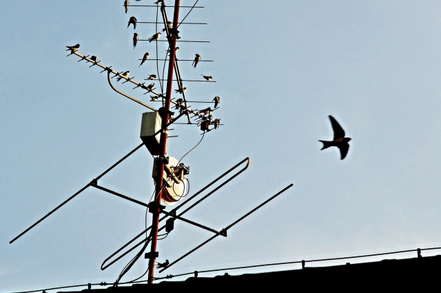 Птицы облюбовали антенну.